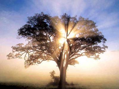 Vida, muerte y vida eterna
