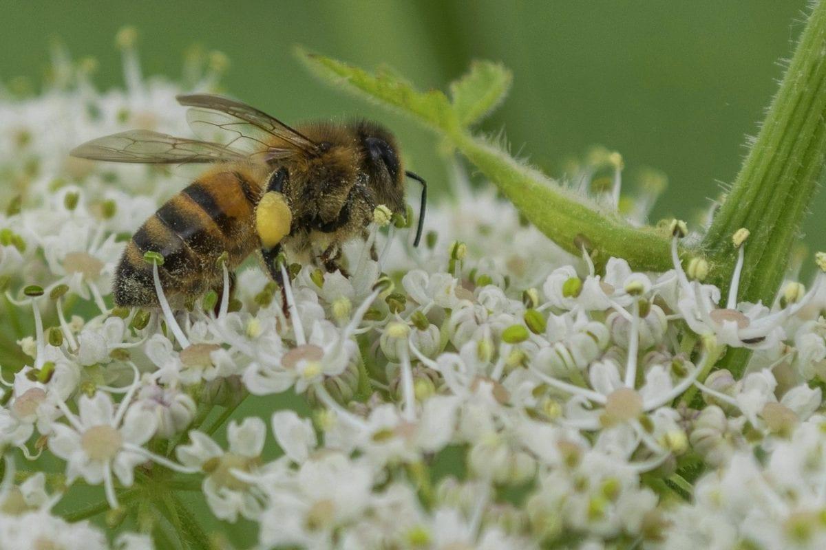 Gafas de abeja