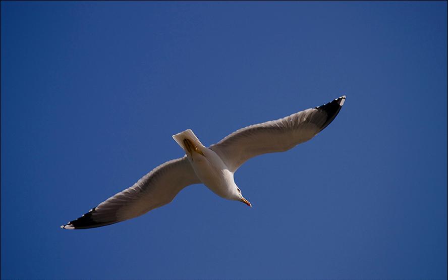 Libertad para volar